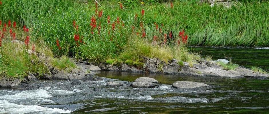 Wabagishik Rapids