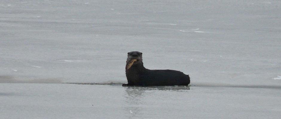 Otter-2008-Dec290001